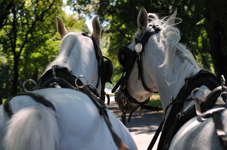 Cavalli con attacchi