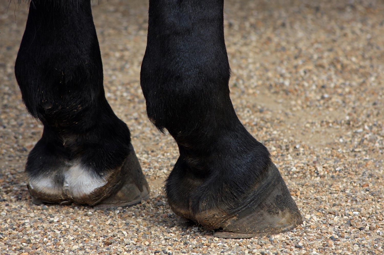 zoccoli di cavallo