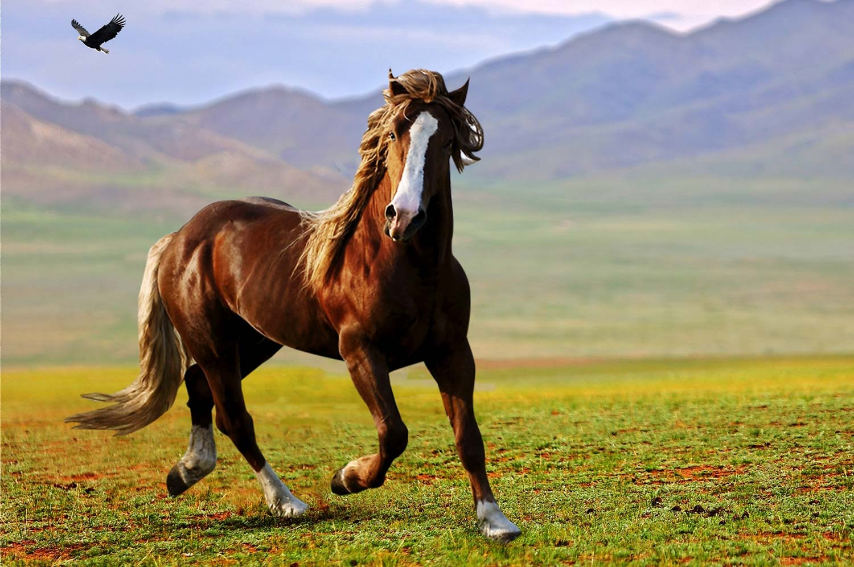 cavalli trottando