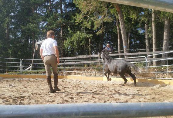 Cavallo nel recinto che corre