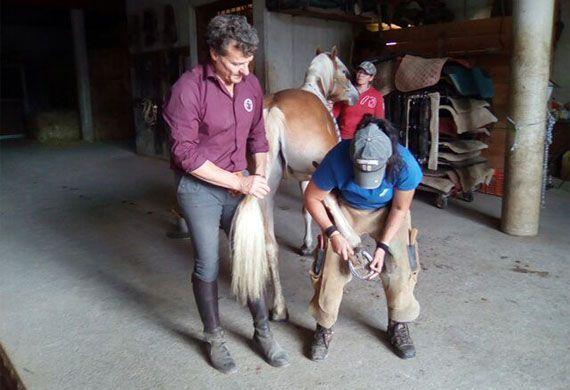 Lezione di come ferrare un cavallo