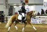 Cavaliere e cavallo in gara