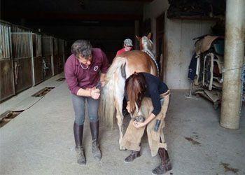Maniscalco che insegna a ferrare un cavallo